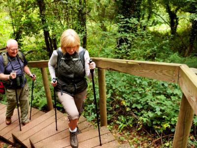 vieillissement cognitif et fonctionnel